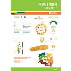 Kukurydza ES Palladium F1 50 tyś C1 Euralis (Nasiona)