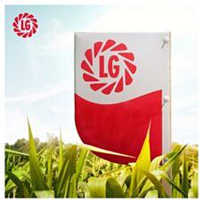 Kukurydza LG 31.280 F1 50tys C1 Limagrain