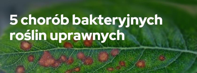 5 chorób bakteryjnych roślin uprawnych