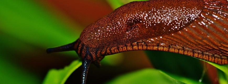 Sposoby na ślimaki niszczące uprawy
