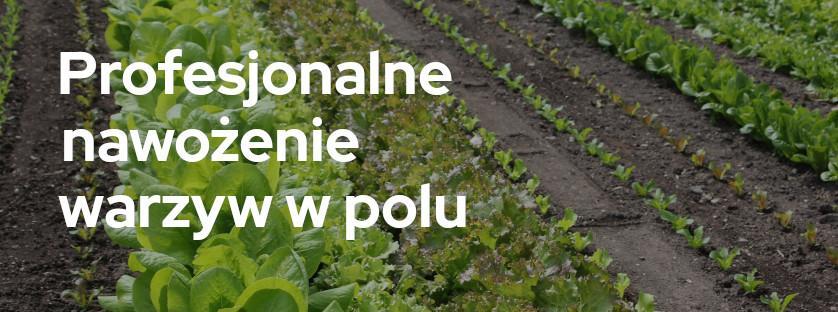 Profesjonalne nawożenie warzyw w polu