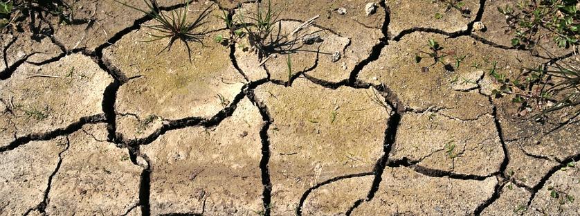 Ubezpieczenie upraw rolnych: co należy wiedzieć?