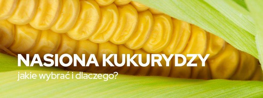 Nasiona kukurydzy - jakie wybrać i dlaczego?