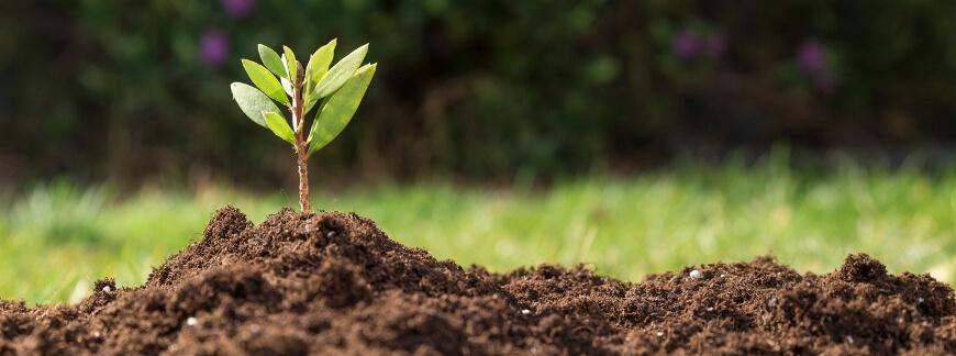 Efektywne stosowanie środków ochrony roślin - Poradnik