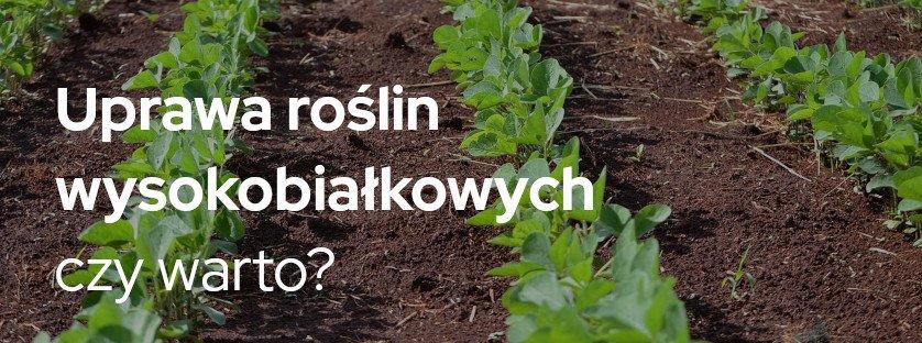 Uprawa roślin wysokobiałkowych – czy warto?