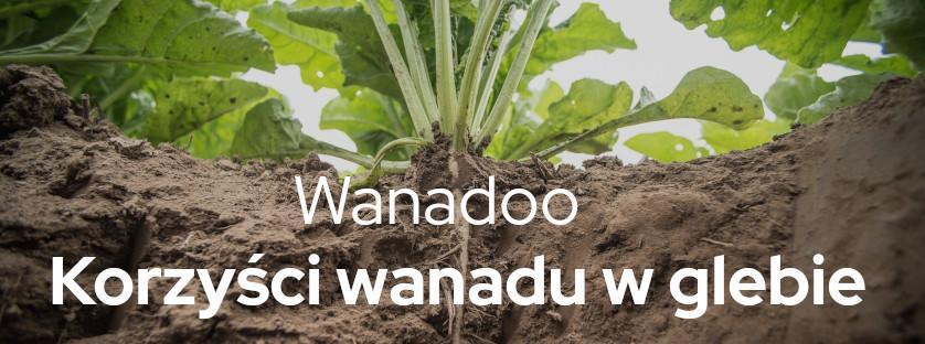 Vanadoo. Korzyści wanadu w glebie