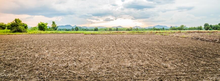 Metody i efekty uprawy uproszczonej