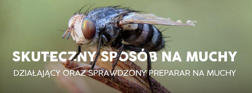 Skuteczny sposób na muchy – działający oraz sprawdzony preparat na muchy